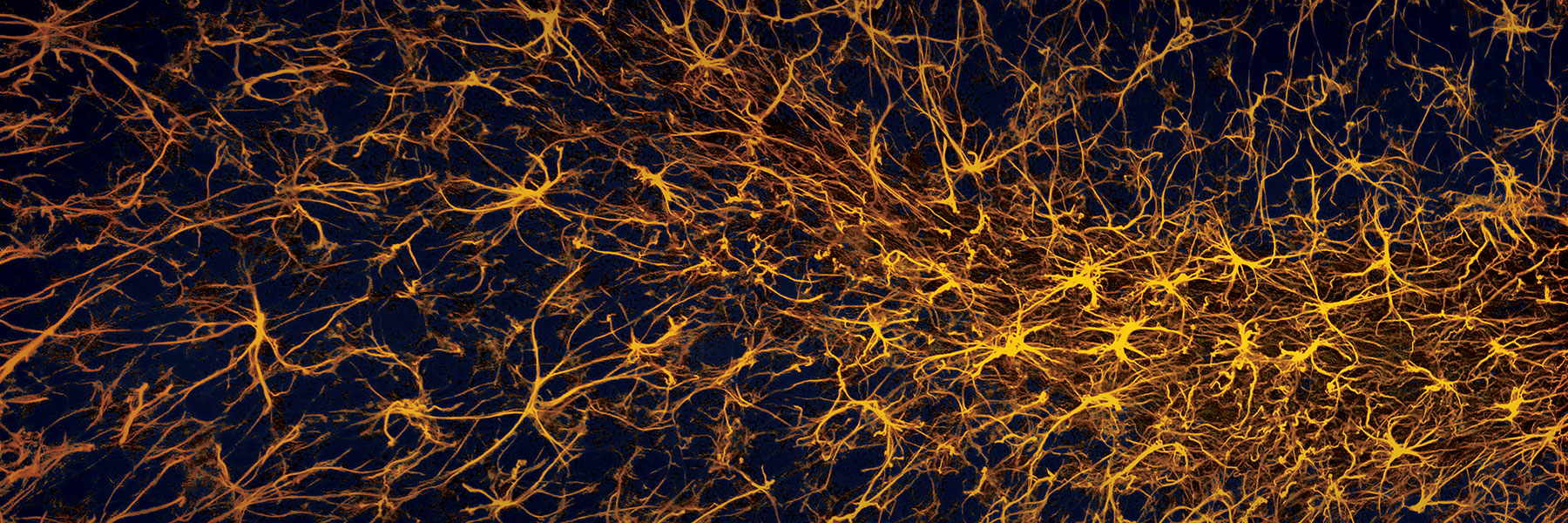 illustration of neurons that look like space and a person's face
