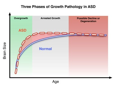 Three Phases of Growth Pathology in ASD