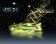 Zebrafish graphic