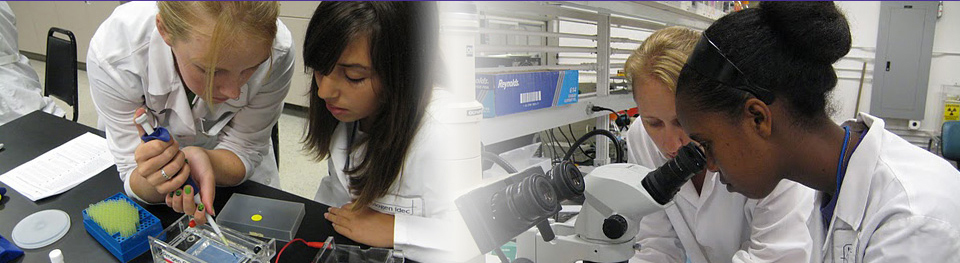 Participants using microscope and pipette