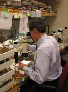 Dr. Haddad working at lab bench