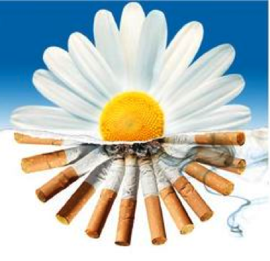 Daisy made with cigarettes